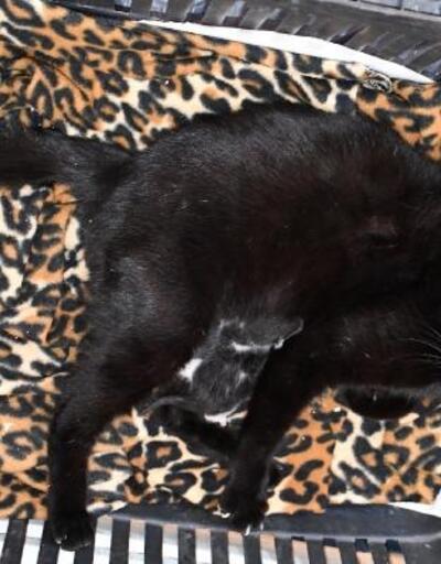 İznik Belediyesi'nin müdahalesi ile gebe kedi hayata döndü