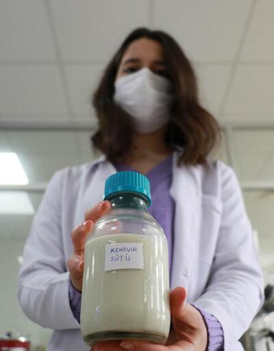 Kenevir tohumlarından süt