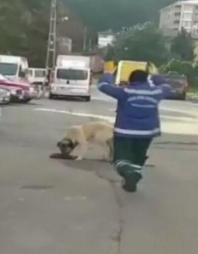 Süpürgesini kaçıran sokak köpeğine 'o bana zimmetli' diye seslendi