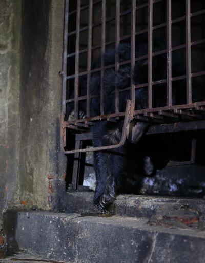 17 senedir karanlık bir bodrumda tutsak kalan 2 ayı kurtarıldı