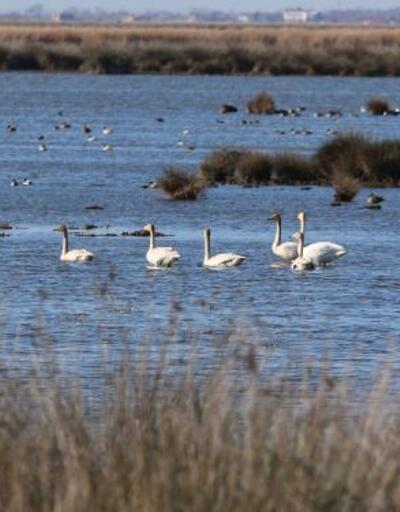 Karadeniz'de, 186 bin 259 su kuşu tespit edildi