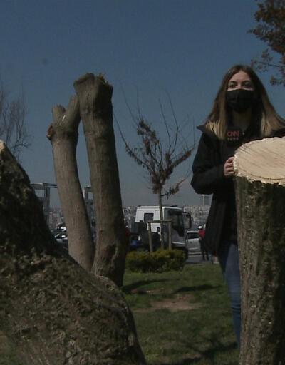 Gece yarısı ağaçları katlettiler!