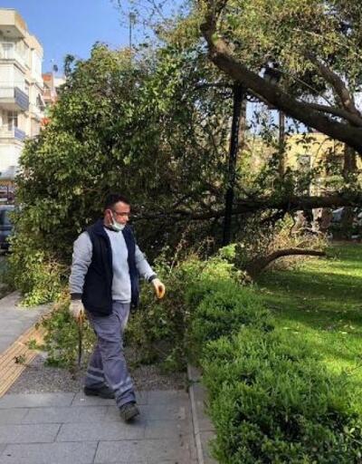 Turgutlu'da fırtınada ağaçlar devrildi