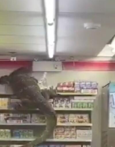 Komodo ejderi markete daldı