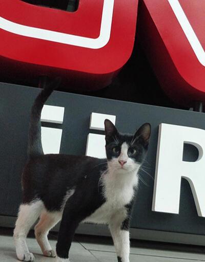 """CNN TÜRK'te """"kedi operasyonu"""""""