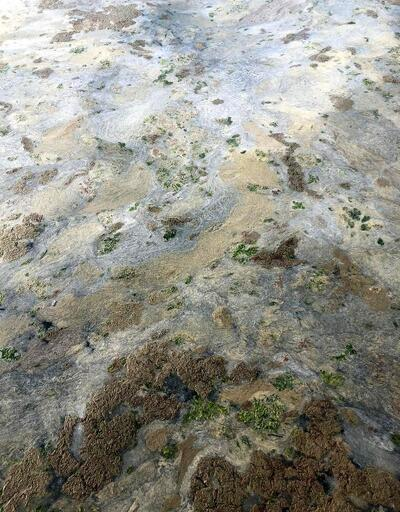 Gemlik sahili plankton patlaması ile bembeyaz oldu