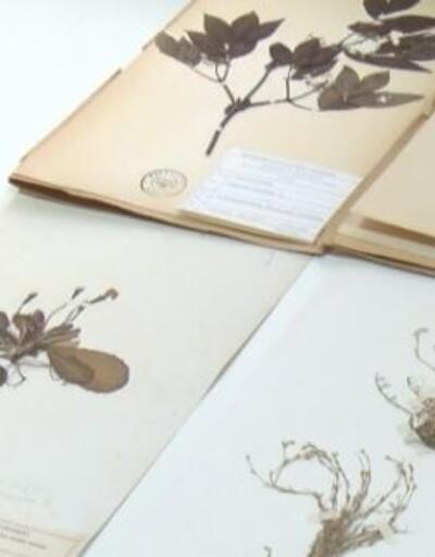 Türkiye'nin bitki kütüphanesi