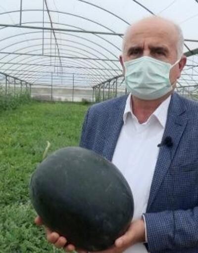 Manavgat'ta erkenci karpuz hasadı