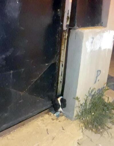 Demir kapıya kafası sıkışan köpek kurtarıldı