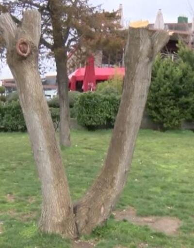 Ağaç kesene fidan dikme cezası verildi