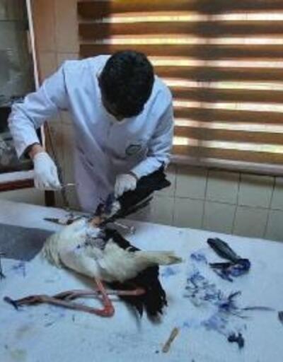 Yüksek gerilim hattına takılarak yaralanan leyleğin kanadı kesildi