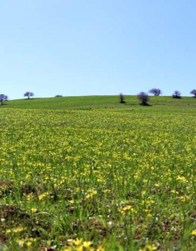 Baharın müjdecisi çiçekler Ağrı'da görsel şölen sunuyor