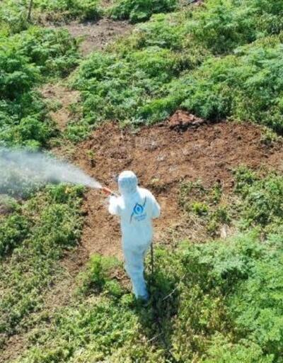 Sivrisineksiz yaz için ilaçlamalar başladı