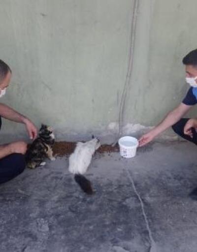 Akdeniz, tam kapanmada sokak hayvanlarını unutmadı