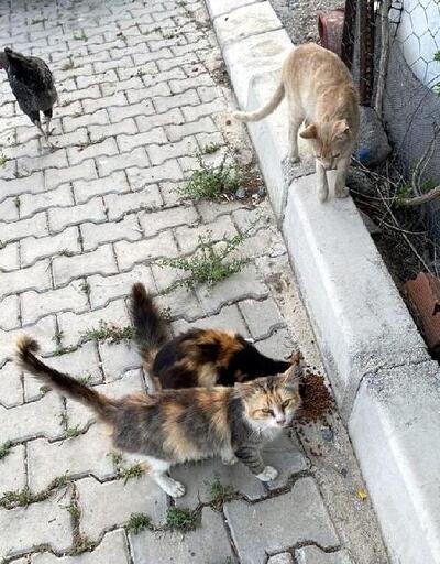 Çiğli'de can dostları unutulmadı