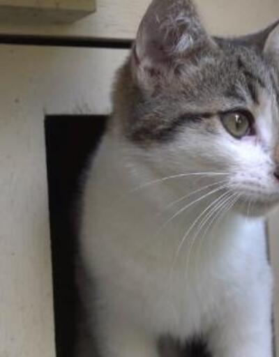 Sokağa atılan yavru kediler sıcak yuvasına kavuştu