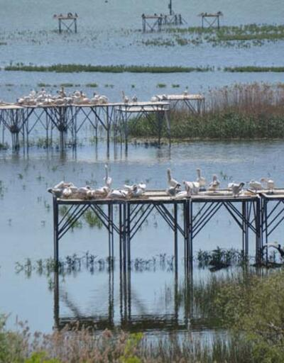 Manyas Kuş Cenneti Milli Parkı'nda kuluçka heyecanı
