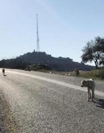 Sokak köpeklerini Germencik'e bırakan Tire Belediyesi'ne 17 bin lira ceza