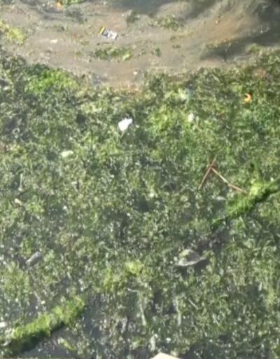 Karşıyaka'da sahili deniz marulları kapladı