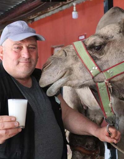 Pandemide deve sütüne talep patlaması