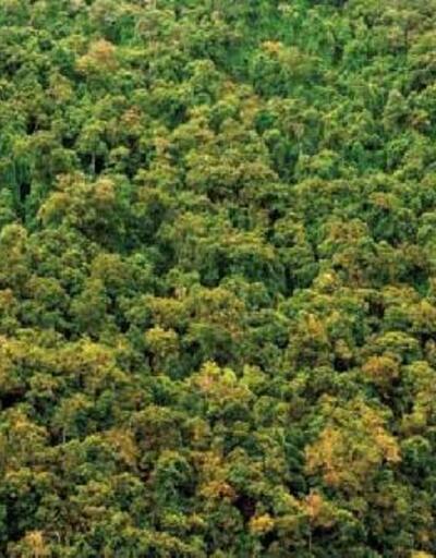 Dünya genelindeki ormanlık alan Fransa kadar büyüdü