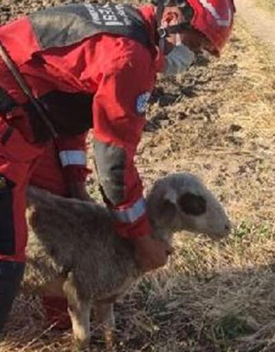 Su kuyusuna düşen koyunu itfaiye kurtardı