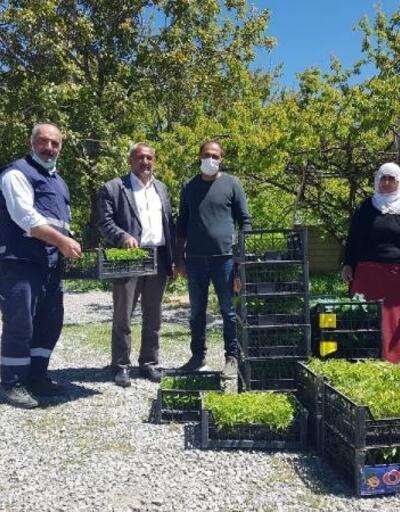 Edremit Belediyesi,çiftçilere 120 bin sebze fidesi dağıttı