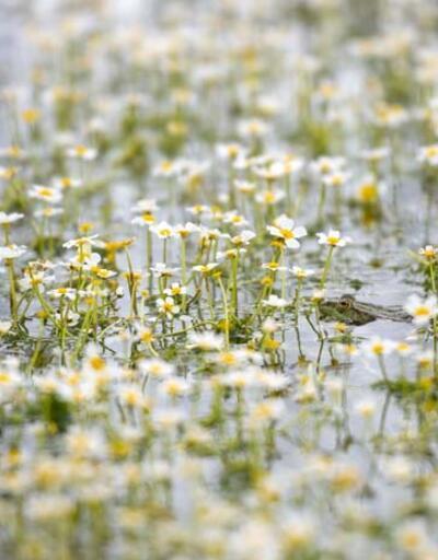 """""""Sülüklü Göl"""" bahar renklerine büründü"""