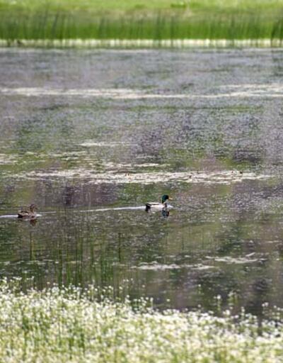 """Doğası ve yaban hayatıyla dikkati çeken Tunceli'deki """"Sülüklü Göl"""" bahar renklerine büründü"""