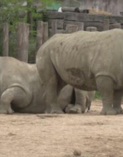 Paris zooloji parkı açılıyor