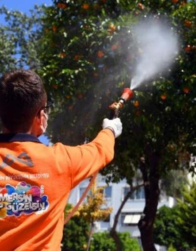Büyükşehir, Akdeniz Meyve Sineği ile mücadele ediyor