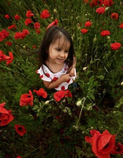 Düzce'de tarlaları kırmızıya boyayan gelincik çiçekleri görsel şölen oluşturdu