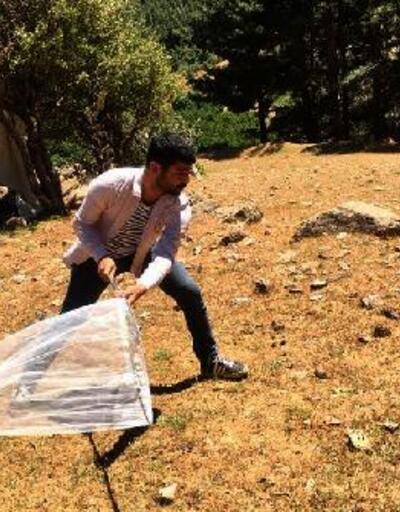Tarım arazilerinde çekirge mücadelesi