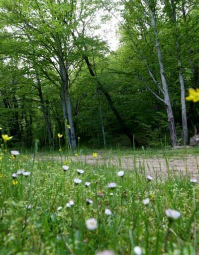 Istranca ormanları ziyaretçilerine görsel şölen sunuyor