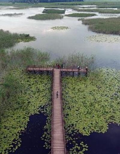 Kuş cenneti Efteni Gölü ziyaretçilerini bekliyor