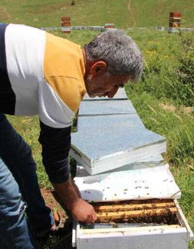 Kuraklık nedeniyle arılar çiçek bulamıyor