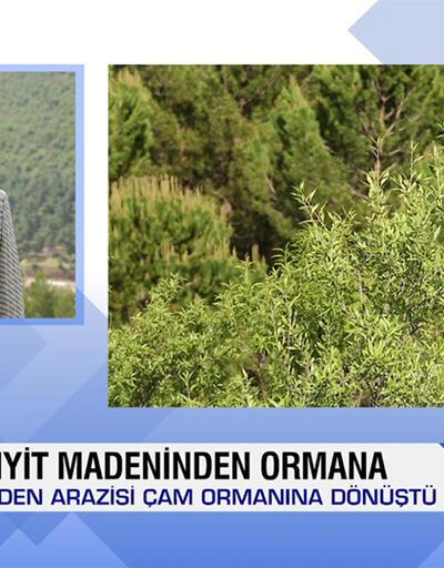 Kütahya'da maden arazisi ormana dönüştü