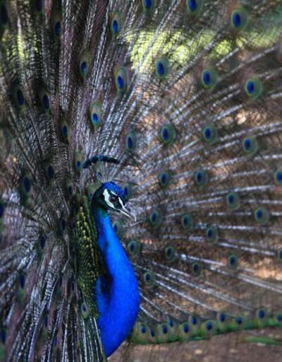 """Antalya Müzesi'nin """"renkli kanatları"""""""