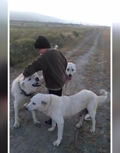11 yaşındaki bir çobanın Akbaş köpeği sevgisi Yeşil Doğa'da ekrana geldi
