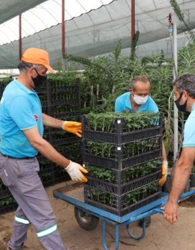 Alanya Belediyesi bayramda 61 bin çiçek dağıtacak