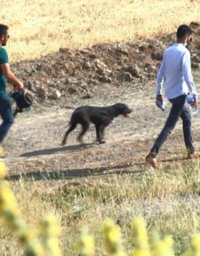 Kaçan kurbanlığın peşinden giden Onur'un son görüntüleri ortaya çıktı