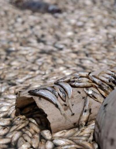 Sular çekildi, balıklar öldü