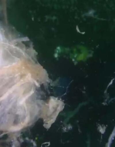 Deniz altındaki müsilaj Marmara ve Kuzey Ege'yi tehdit etmeye devam diyor