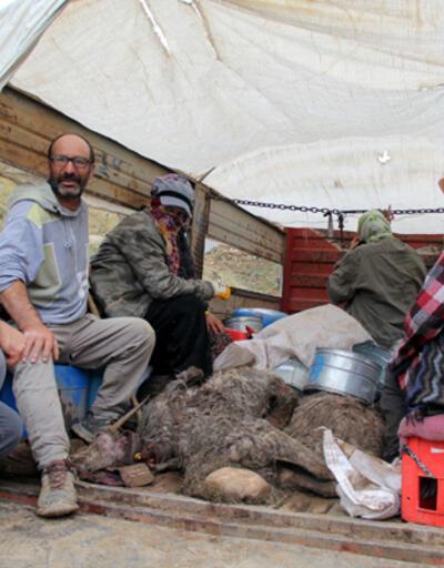 Yüksekova'da etkili olan sağanak, yayladaki koyun sürüsüne büyük zarar verdi