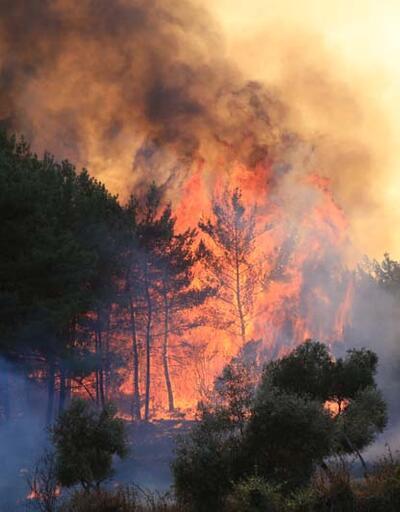 Muğla Milas'taki yangını söndürme çalışmaları devam ediyor