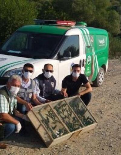 Osmaniye'de, 120 saka kuşu doğaya salındı