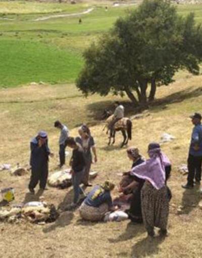 Yüksekova'da yıldırım isabet eden30 koyun öldü