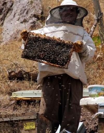 Üniversite mezunu kadın arıcı, 70 arı kovanından 500 kilo bal verimi elde etti