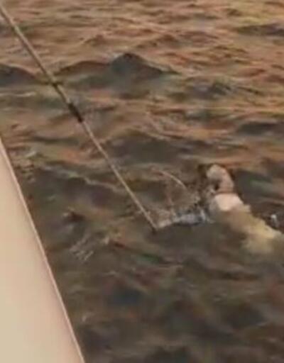 Yangından kaçıp denizde mahsur kalan köpek kurtarıldı