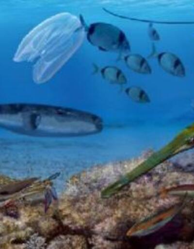 Prof. Dr. Öztürk: Denizlerimizdeki yabancı türler biyo-güvenlik sorununa neden oluyor